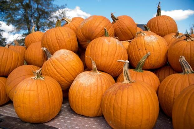 Old Baker Farm Pumpkin Patch Opens Sept 26 Shelby County Reporter Shelby County Reporter